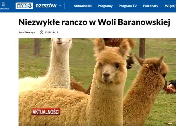 Ranczo Alpaka w TVP3Rzeszów